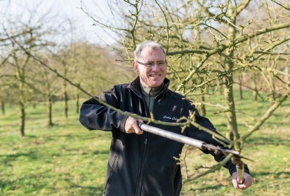 Pruning the cider apple orchard